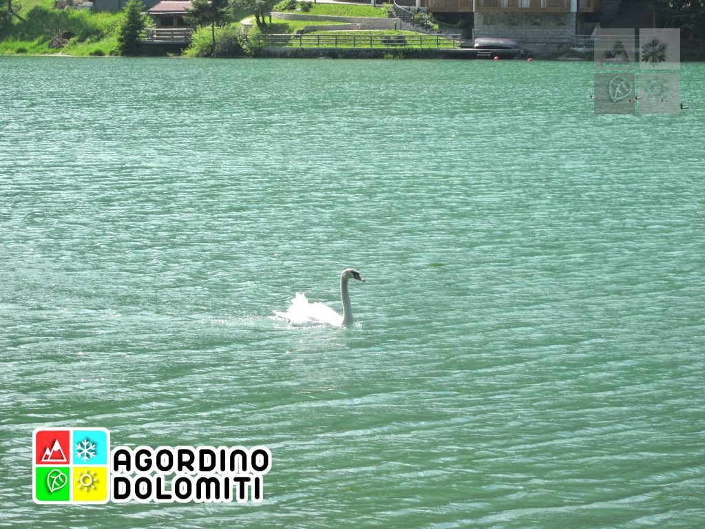 Natura Dolomiti