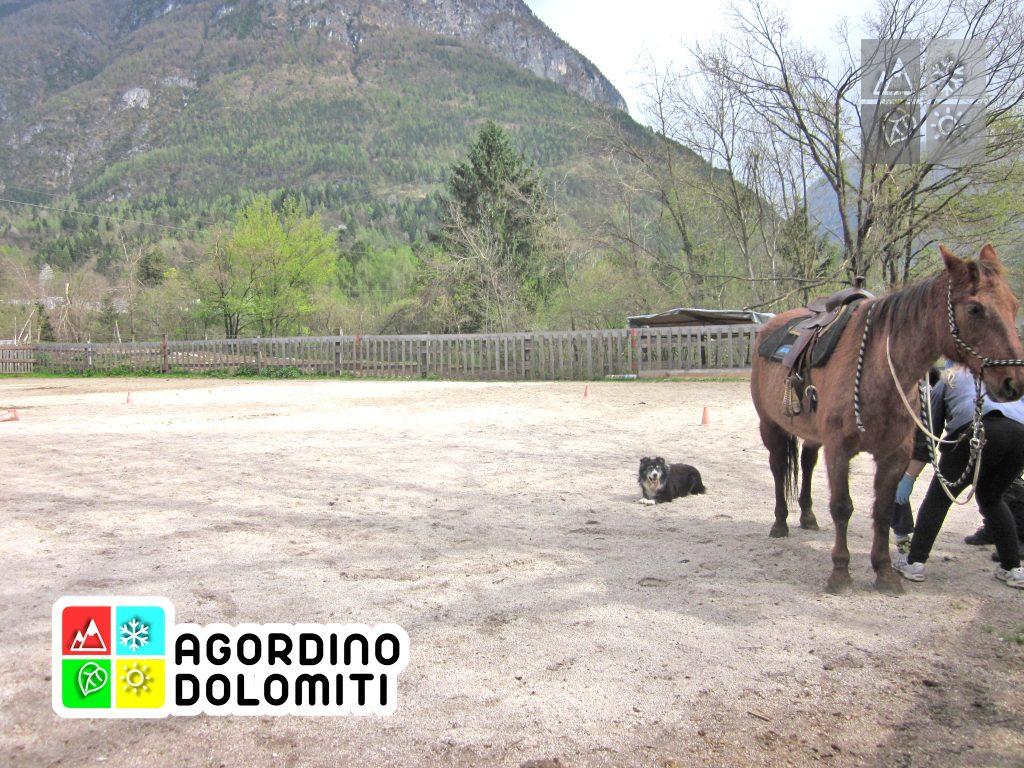 trekking a cavallo dolomiti