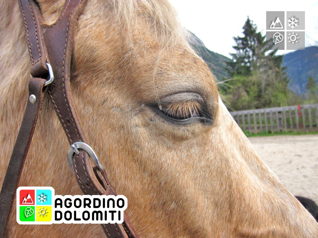 Equitazione Dolomiti