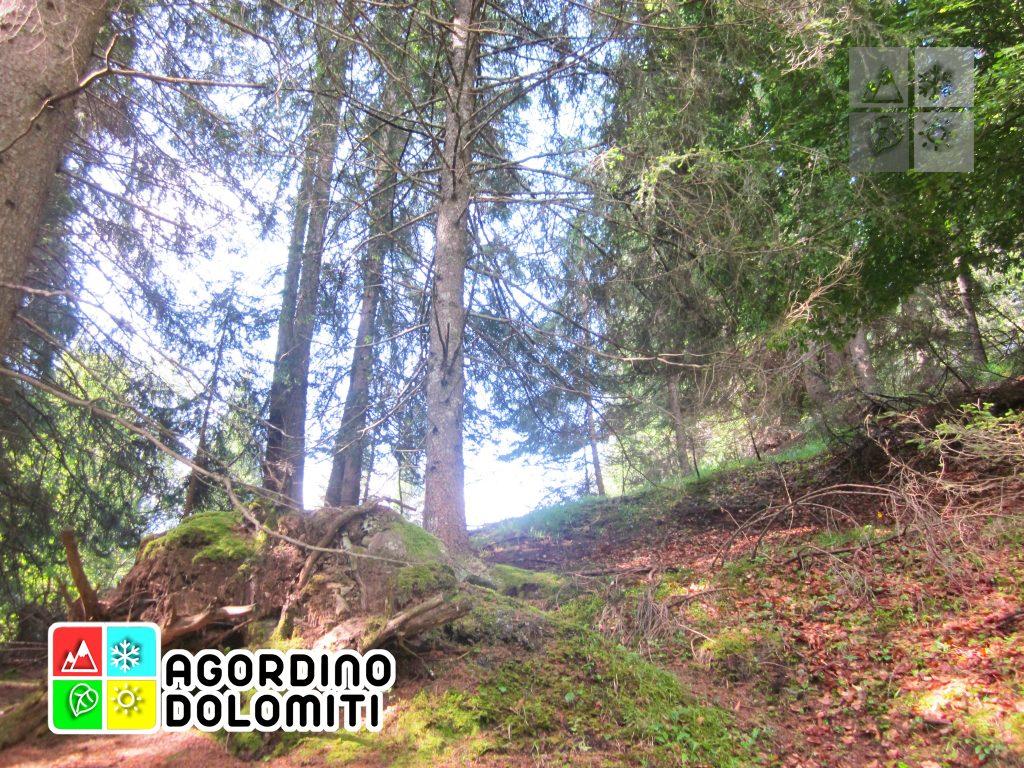 Col de Tone - San Tomaso Agordino Dolomiti