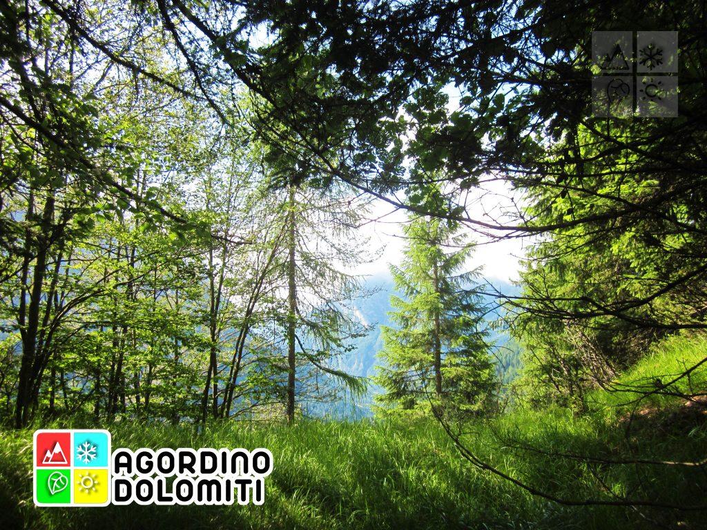 Col de Toni - San Tomaso Agordino - Dolomiti