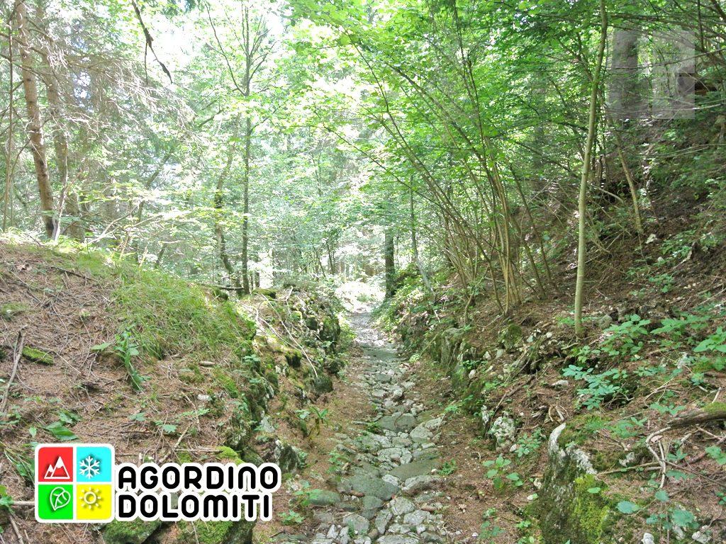 sentiero_geologico_agordo_agordino_dolomiti (18)