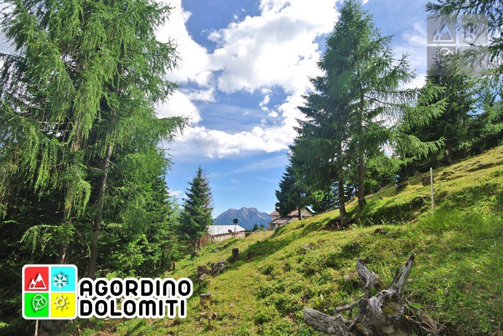 sentiero_geologico_agordo_agordino_dolomiti (29)