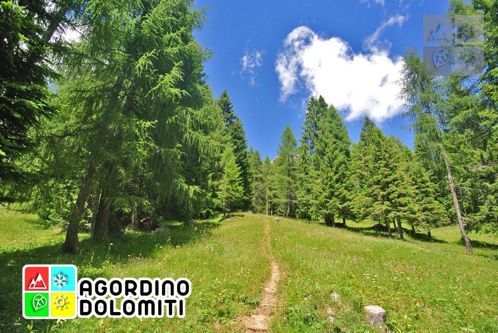 sentiero_geologico_agordo_agordino_dolomiti (68)