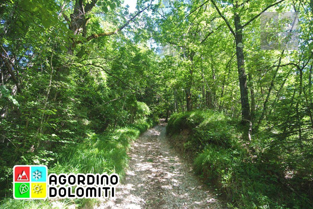 sentiero_geologico_agordo_agordino_dolomiti (90)