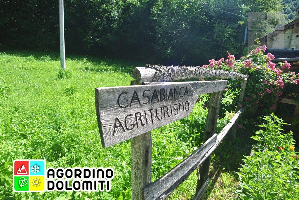 sentiero_geologico_agordo_agordino_dolomiti (98)