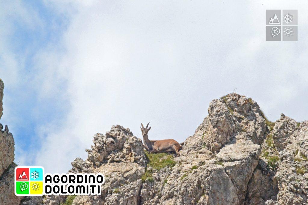 Cima_Sasso_Bianco_Escursioni_Nelle_Dolomiti (2)