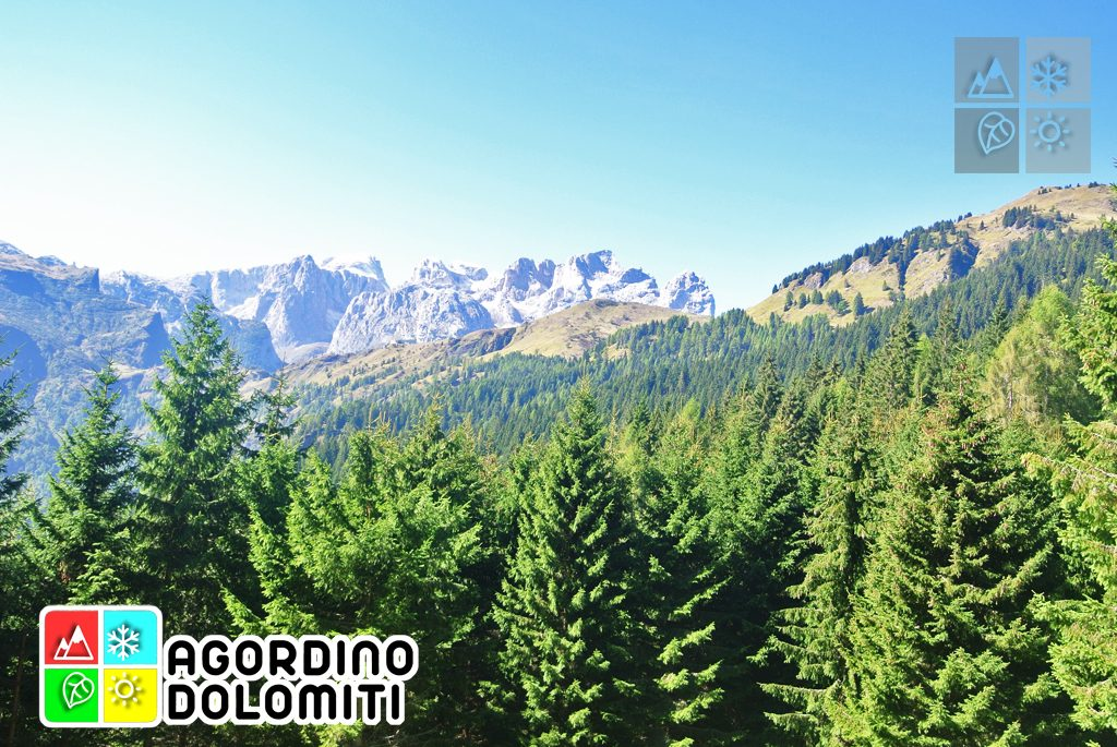 Vista sulle Pale di San Martino da Malgonera