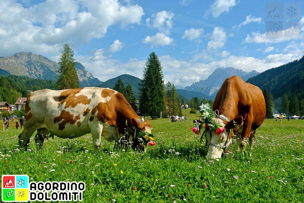 Se Desmonteghea | Festa della Transumanza delle Dolomiti | Falcade, Val Biois | Agordino Dolomiti